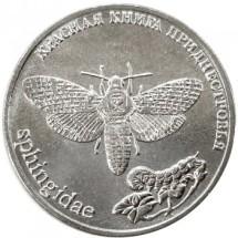 бабочка адамова голова